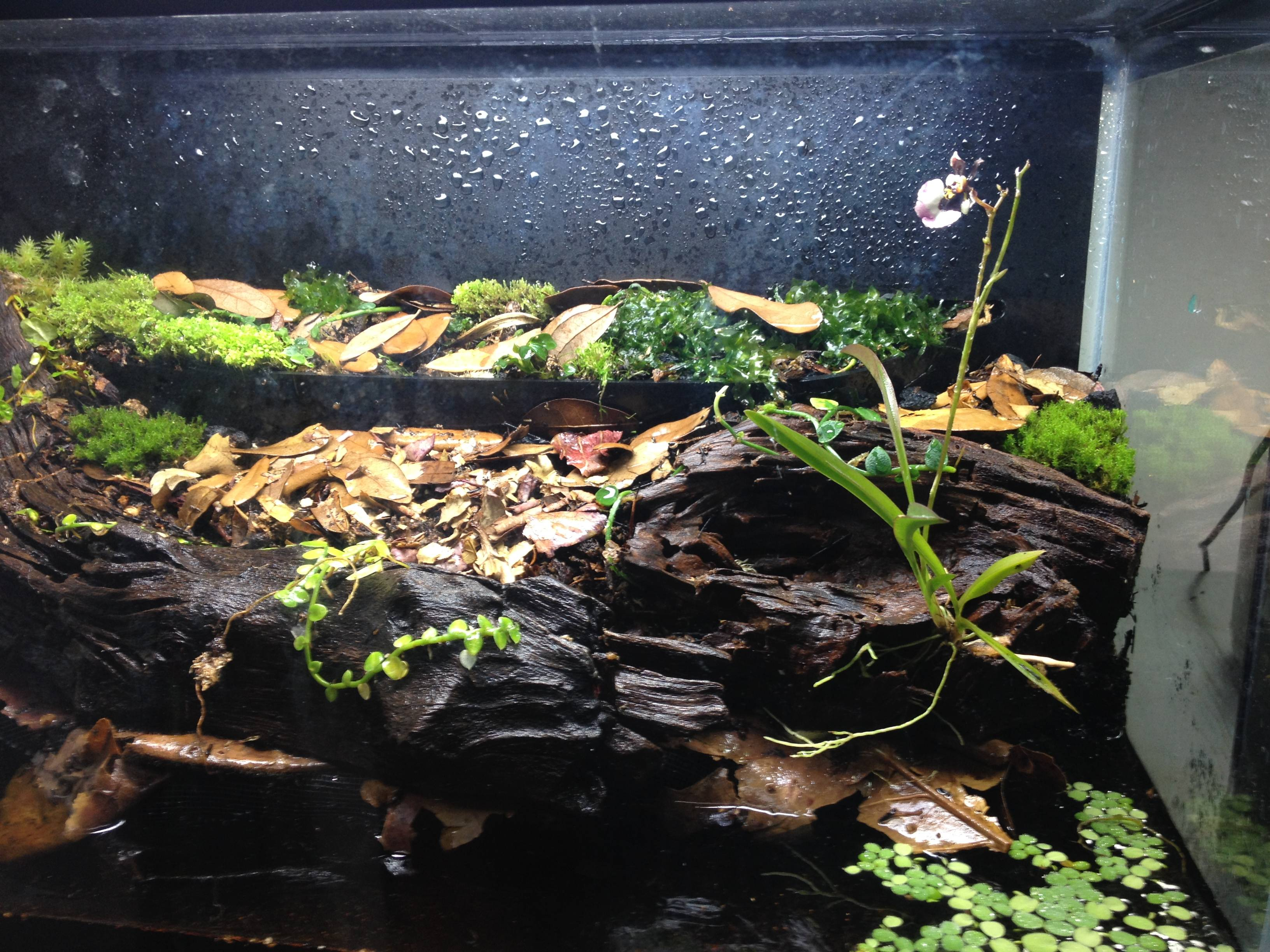 mellowvision.com — A quick 10 gallon paludarium for crabs 10 Gallon Paludarium